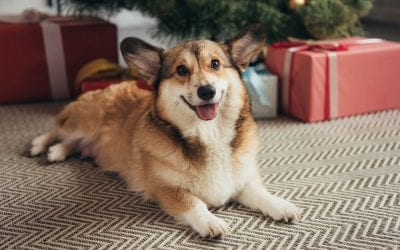 What to Know About Holiday Plants and Pet Safety